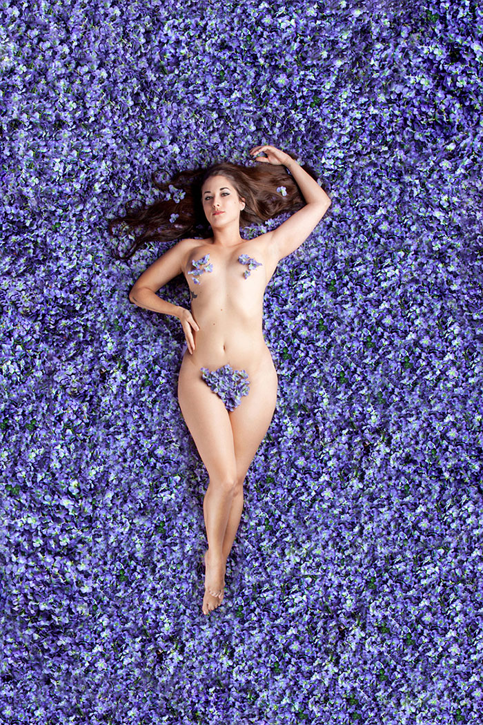 American Beauty by Carey Fruth