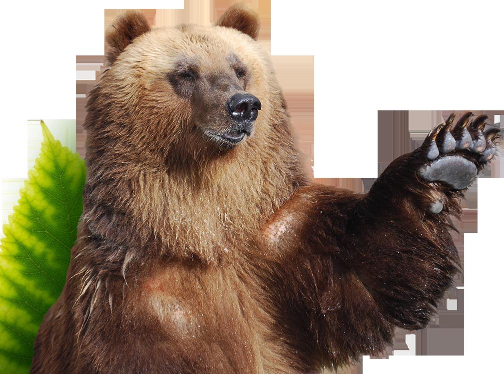 bear-bye
