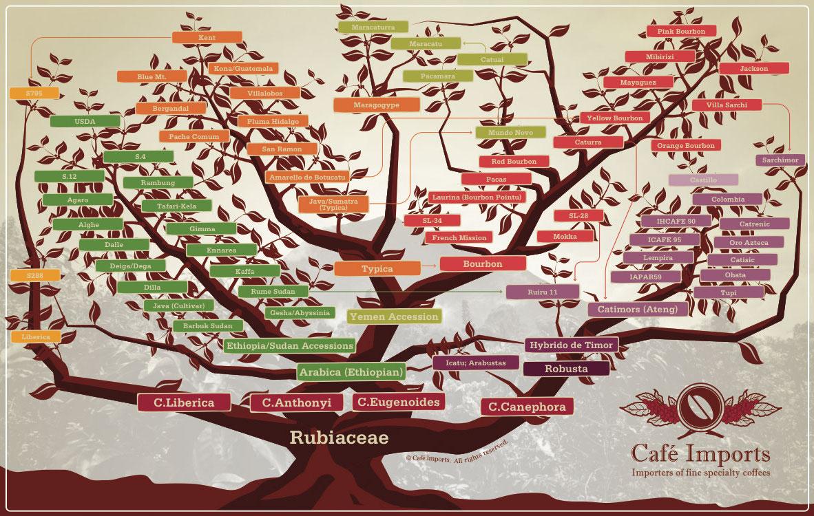 varietal tree