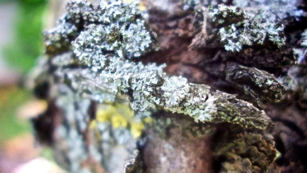 Egy fa részlete.