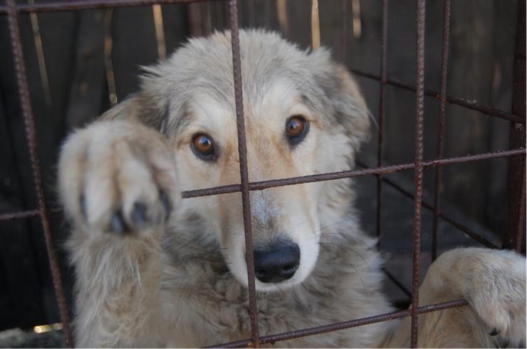 Csak aki már belenézett egy megmentett kutya hálás szemébe, tudja, mi is az a kutyahűség.