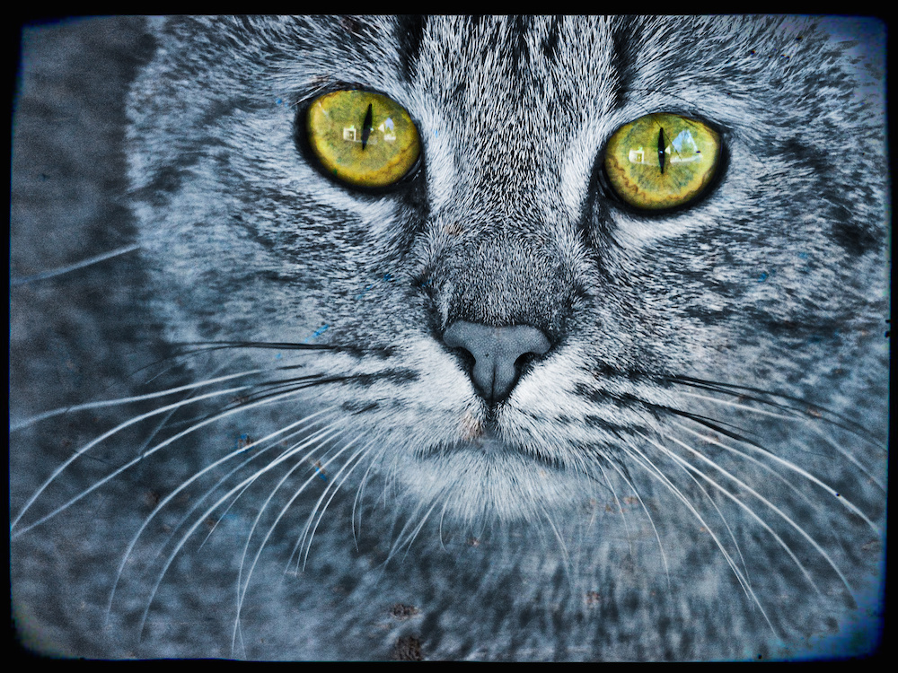 Final cat