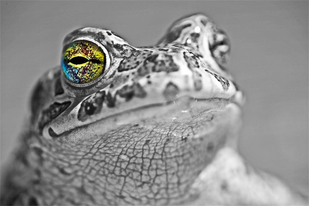 Jay Frog.
