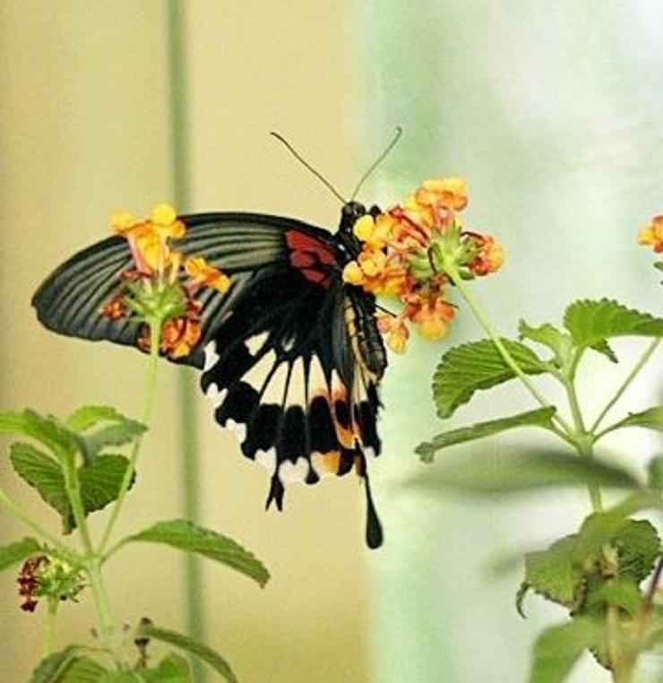 Elképzelem milyen lehet a pillangók nyelve, érteném-e.