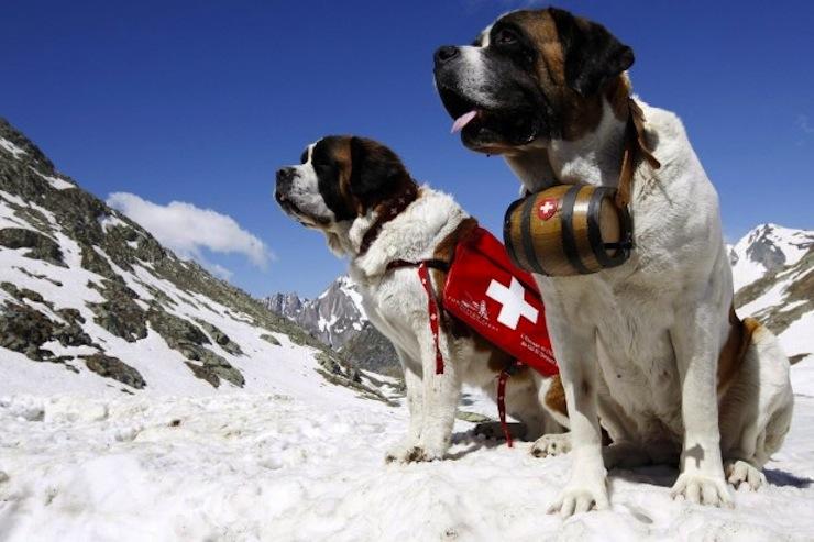 hegyimentő kutyák